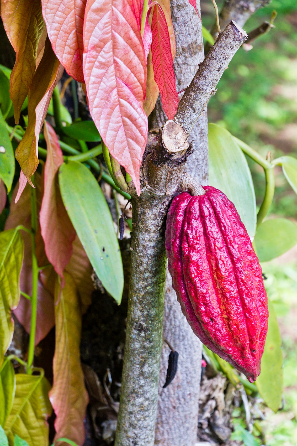 Grenada-the-spice-island